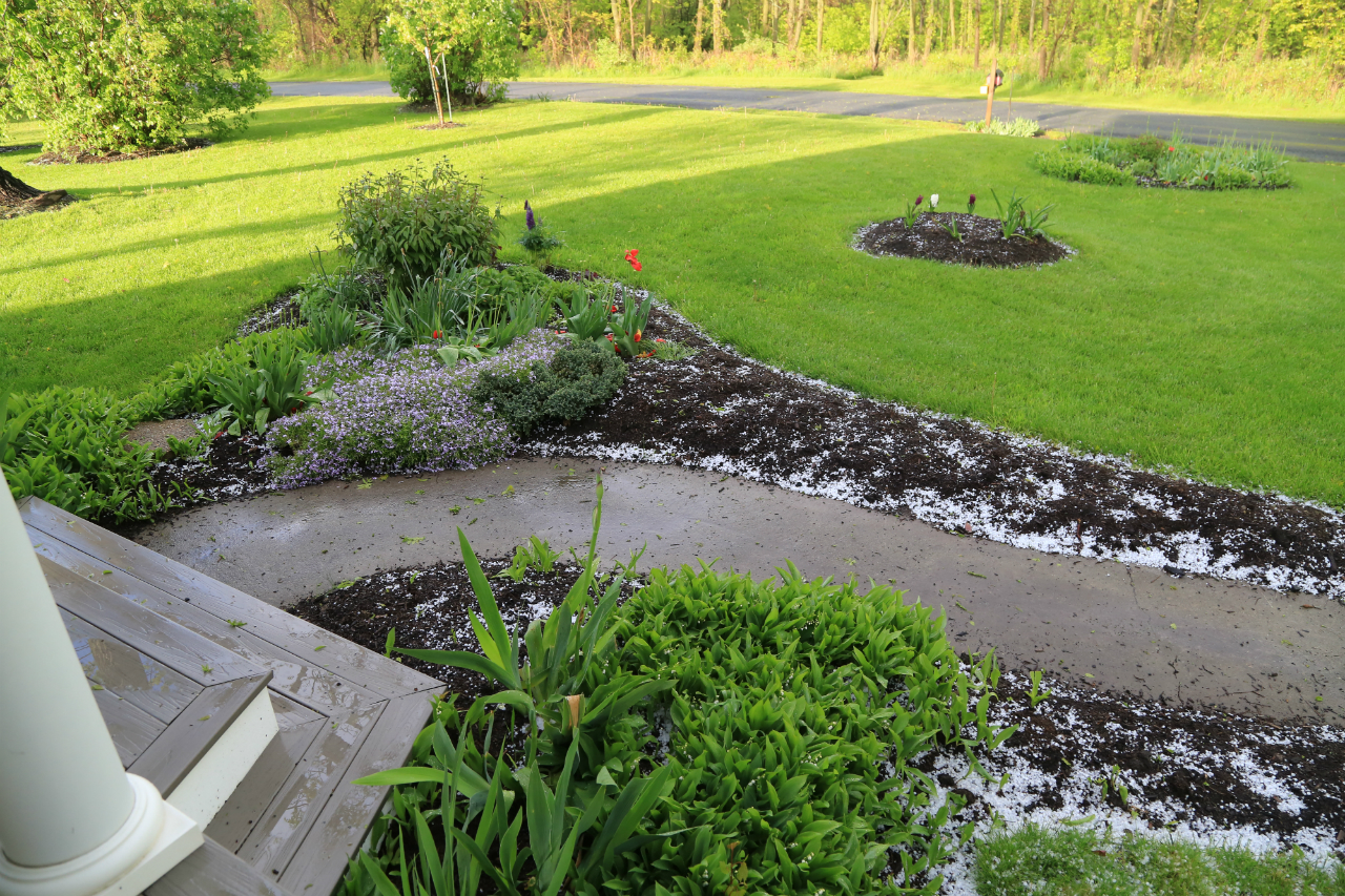 Flower beds after the hail (photo)